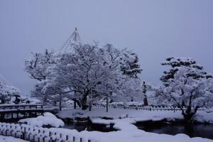 雁行橋と旭桜