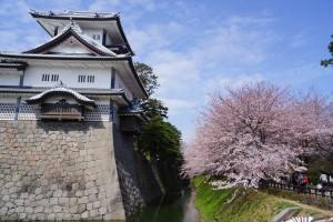 内堀と桜並木