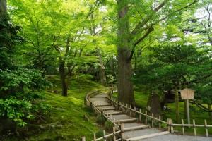 新緑の山崎山