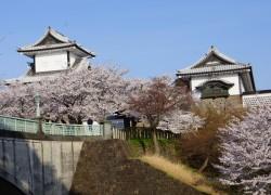紺屋坂から見た石川門。 ここからの桜風景も絵になりそう。