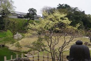 ドウダンツツジ(玉泉院丸庭園)