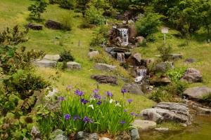 ハナショウブと段落ちの滝(玉泉院丸庭園)